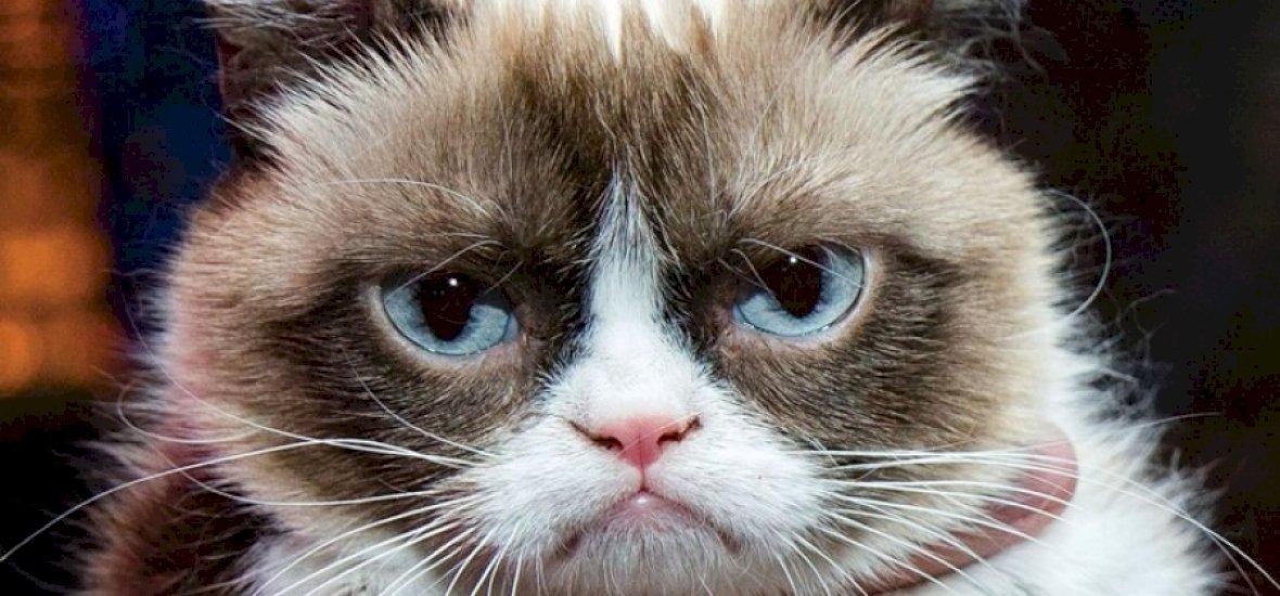 Ez a tíz macska százszor többet keres, mint mi