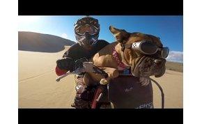 Ennél a sivatagban motorozó kutyánál, még nem láttál boldogabbat