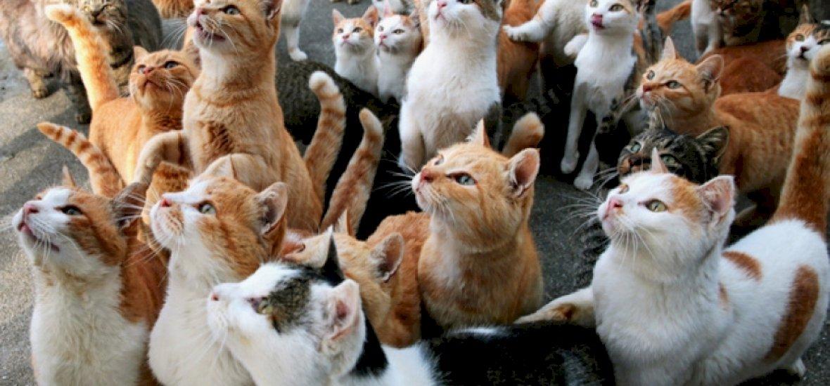 A sziget, melyet elfoglaltak a macskák