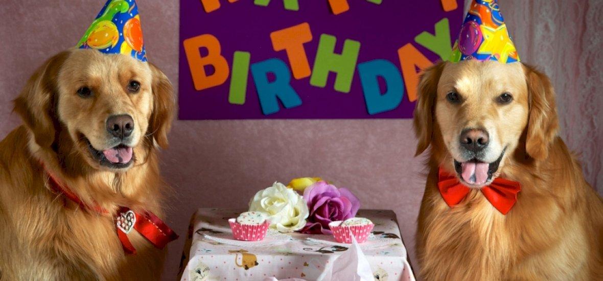 Most már ingyen van a Happy Birthday to You