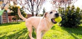 Érdekes svéd kutatás: a kutyatartás csökkentheti a halálozást