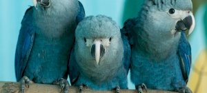 Nem lassít az emberiség: újabb nyolc madárfaj halhat ki