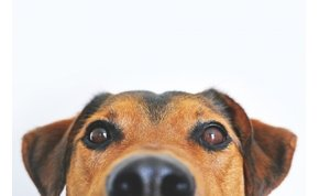 Mostantól ételrendeléssel is segíthetsz az árva kutyusokon