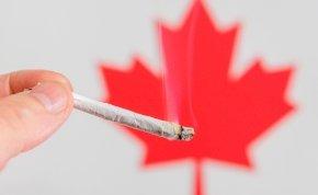 Óriási marihuánahiány van Kanadában, a boltok nem tudnak kinyitni