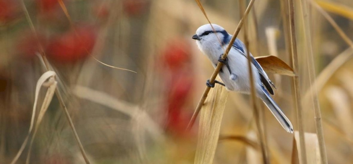 Itthon még nem látott madarat fotóztak Szeged közelében