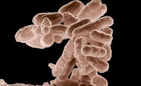 Szegedi kutatók jelentős felfedezést tettek a baktériumok elleni harcban