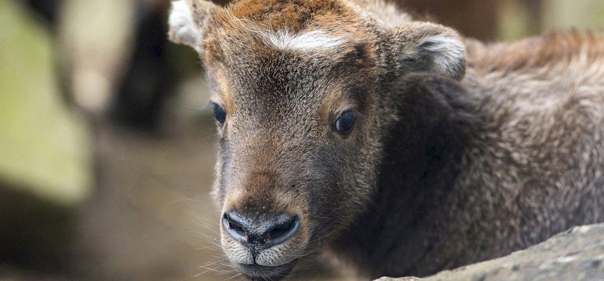 Különleges külsejű állatok születtek a Nyíregyházi Állatparkban