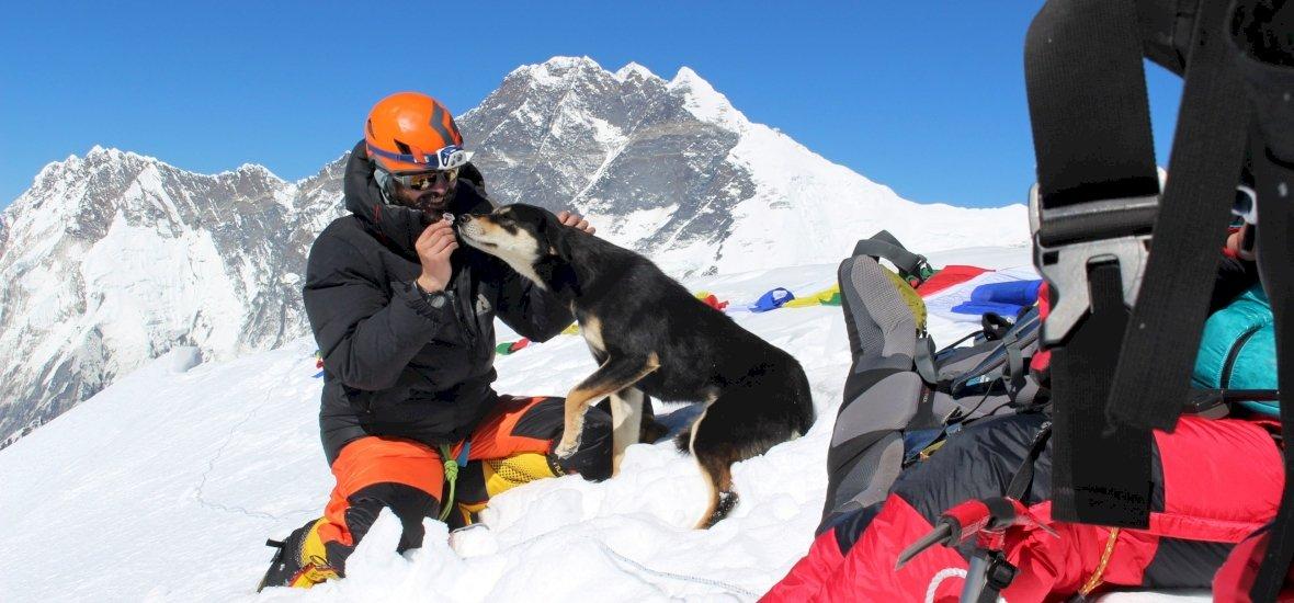 Serpák ilyet még nem láttak: egy kutya felért egy himalájai csúcsra