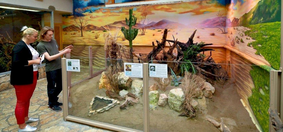 Galléros gyíkot is láthatunk a debreceni állatkertben