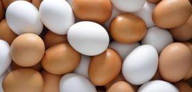 Akadémiai állásfoglalás arról, a tyúk vagy a tojás volt-e előbb