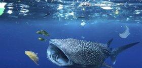 22 kilogramm műanyag volt egy partra vetődött bálna gyomrában