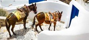 100 kiló vagy? Nem ülhetsz már szamárra a legszebb görög szigeten