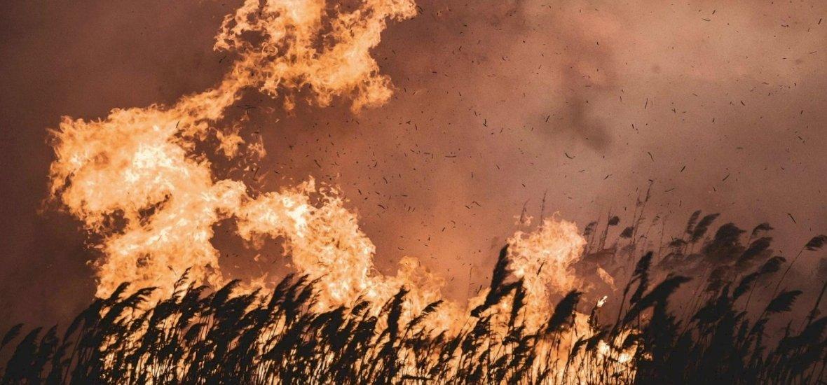 Videón mutatták be a tűzoltók harcát a hatalmas hazai nádtűzzel