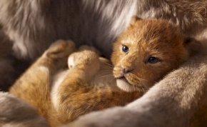 Megérkezett Az oroszlánkirály új előzetese