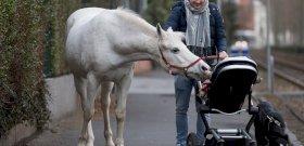 Egy város, ahol már senkinek nem tűnik fel az egyedül sétálgató ló