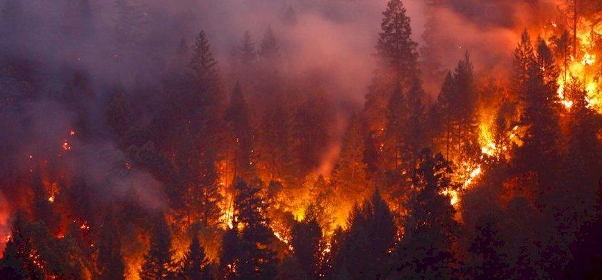 Órákig lángolt Micimackó otthona