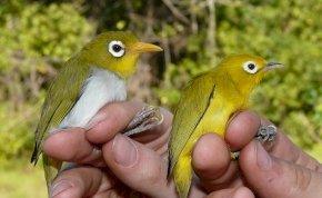 Új madárfajokat fedeztek fel Indonéziában