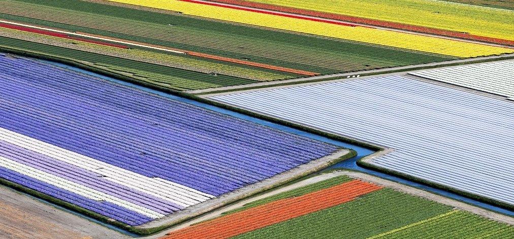 Hollandia eddig bírta elviselni a tulipántaposó turistaáradatot