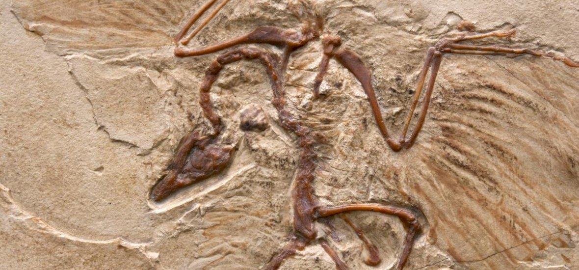 Az evolúció szempontjából kulcsfontosságú fosszília került elő