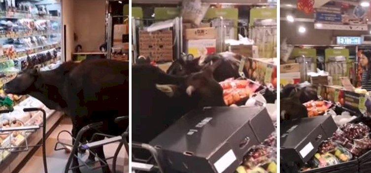 Vadmarhák kezdtek fosztogatni egy élelmiszerboltban