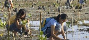 Törvény írja elő, hogy minden diák 10 fát ültessen tanulmányai végén