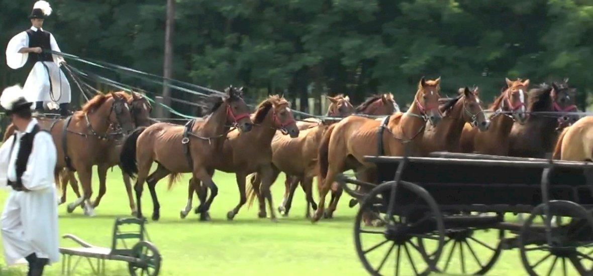 Rekordkísérlet: ekkora fogatot még nem hajtott csikós a lovak hátán