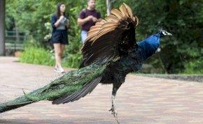 Végeláthatatlanul hosszú a Nyíregyházi Állatpark új tanösvénye