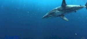 Cápát videóztak le a népszerű horvát üdülőhelyen