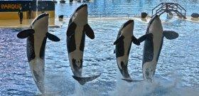 Életbe lép a Szabadítsátok ki Willyt!-törvény a delfinekért