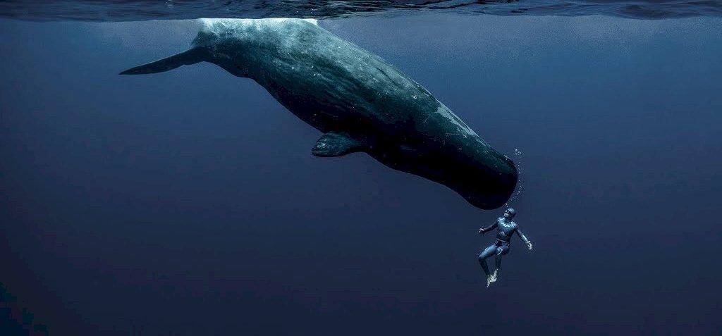 Feltárul előttünk a tengerfenék varázslatos világa – lenyűgöző látvány