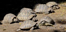 Három évet is kaphat, aki agyonverte a budapesti állatkert teknősét
