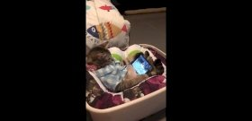 Al Bundy elbújhat e macska mögött – videó