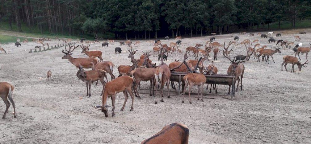 Mesés videó készült Nógrádban a vadállatok hatalmas seregéről