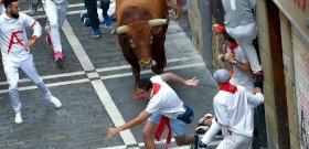 Pamplonában megint a bikák győztek, meg az emberi állatság