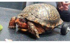 Ismerd meg a szélvészgyors, hátsókerék-meghajtású veterán teknőst
