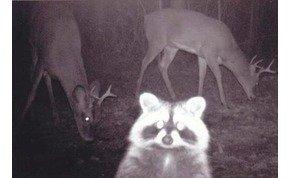 Zseniális és vicces fotók kerültek elő az állatok titkos éjszakai életéről – galéria
