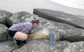 Így kell megmenteni a sziklák közé szorult hatalmas levesteknőst