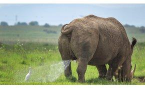 Természetfotó-verseny humoros állatképeknek? Ilyen is van!