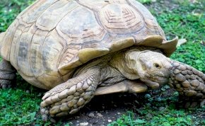 Elpusztult egy 344 éves teknős Nigériában