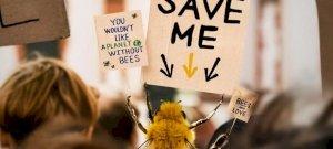 Itt a világ első méhecske influencere – nemes célért küzd