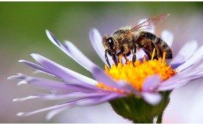 Kihalás fenyegeti a rovarok 40 százalékát, ami súlyos következményekkel jár