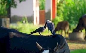 Félelmetes dolgot művelt a világ legokosabb madara – videó