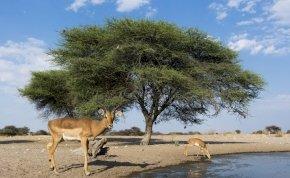 Az afrikai trópusi növények egyharmada a kihalás szélén áll