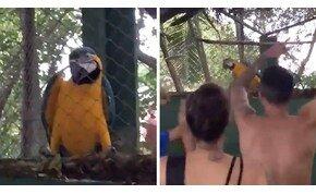 Ez a papagáj nagyon érzi a zenét – videó