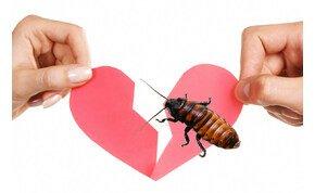Meglepnéd az exedet Valentin-napon? Nevezz el róla egy csótányt