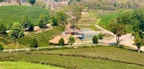 Zsolt utazása az Aranyháromszög és a thaiföldi tea vidékére – galéria