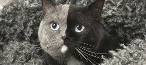 Csodálatos szörnyszülött: a kétarcú cica mancsai előtt hever az internet – videó
