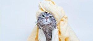 Az igaz, hogy a macskák gyűlölik a vizet? És fürdeni is utálnak?