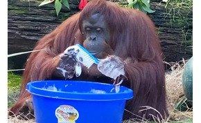 Ha ez a majom megtanult kezet mosni, akkor neked is menni fog