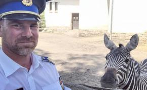 Itt a rendőrség Zebra-terve
